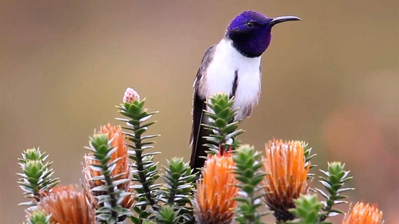 Ecuadorian hummingbirds can sing and hear in ultrasonic pitches finds news study- Technology News, Firstpost