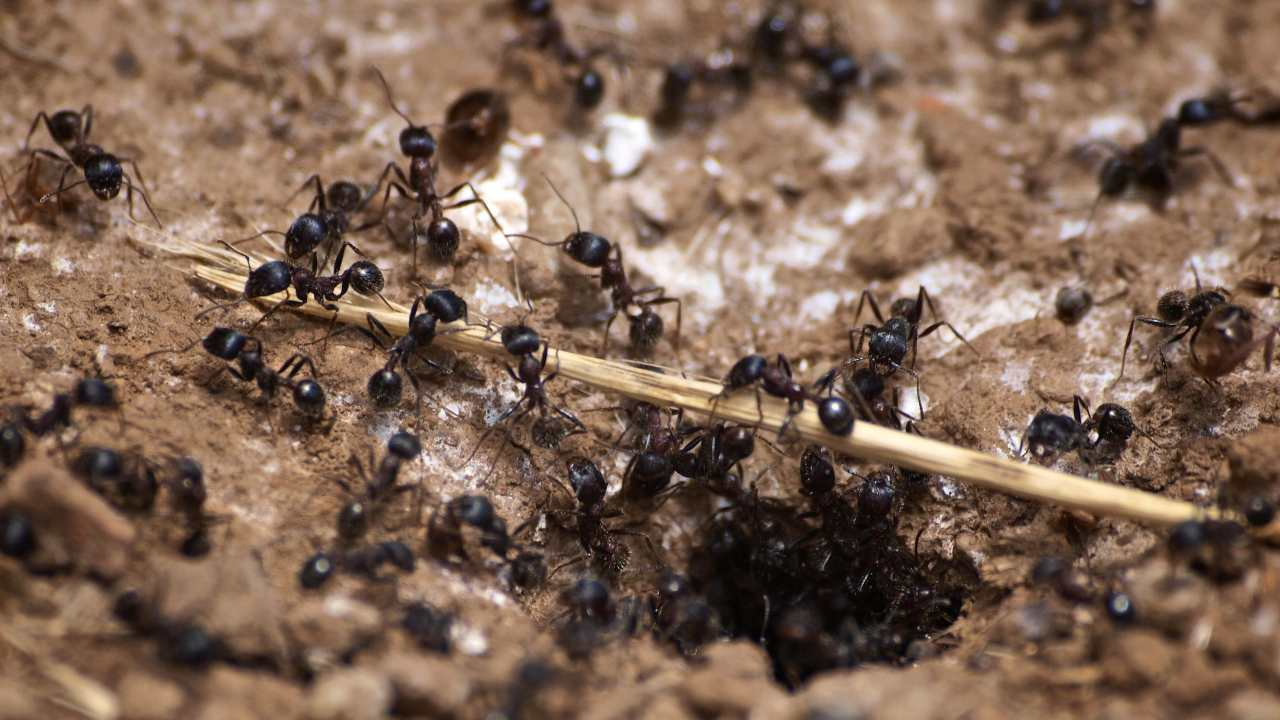 Miniature pandemics in social insects give scientists clues to how nature controls disease- Technology News, Firstpost