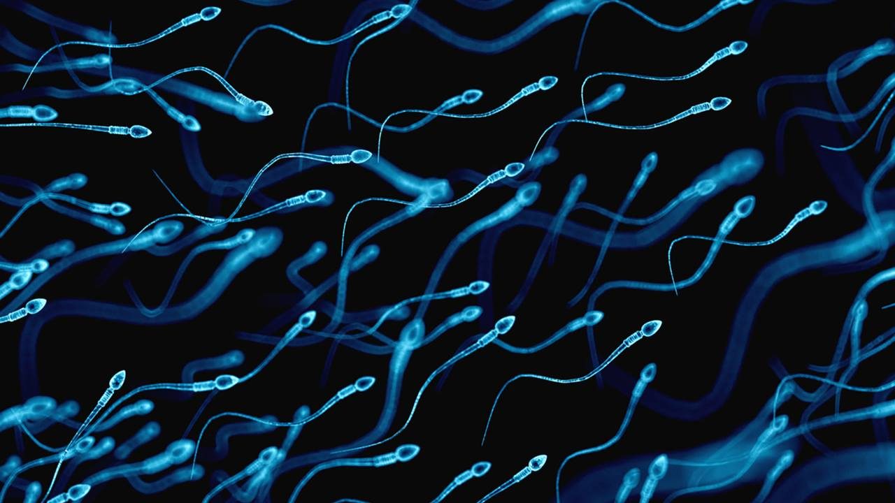 COVID-19 could damage quality of sperm, reduce fertility in men, study suggests