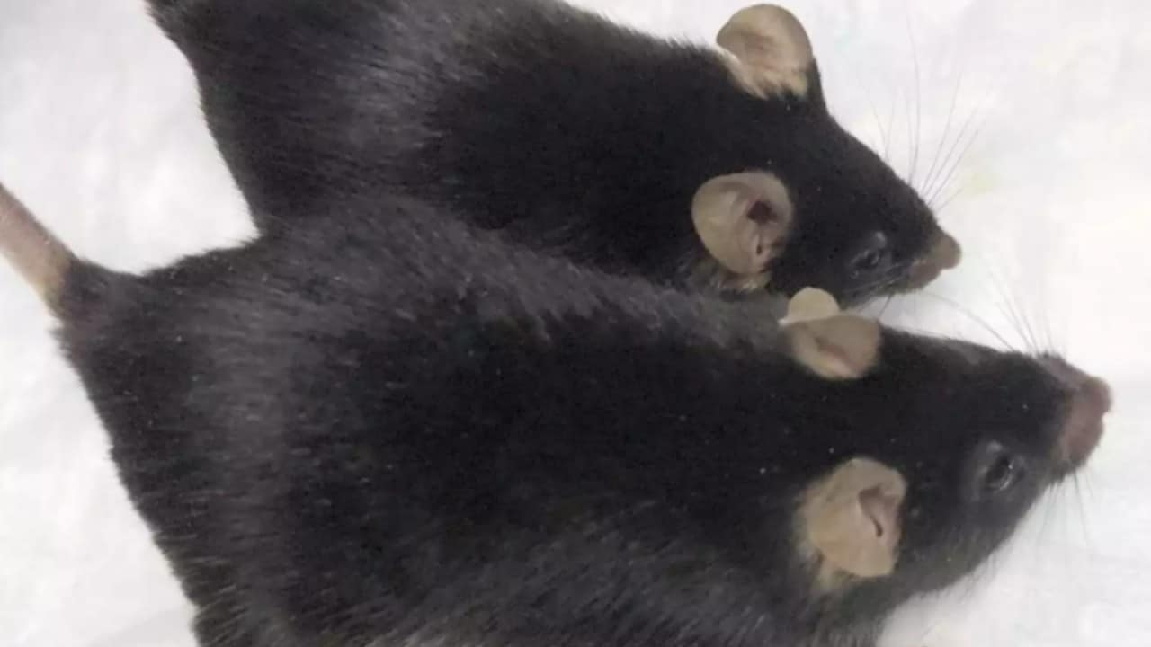 Genetically engineered 'mighty mice' hold onto muscle during month-long stay at ISS- Technology News, Gadgetclock