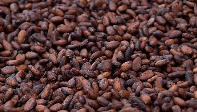 Flavanols in cocoa improve brain vascular function, cognition in young, healthy adults, says new study