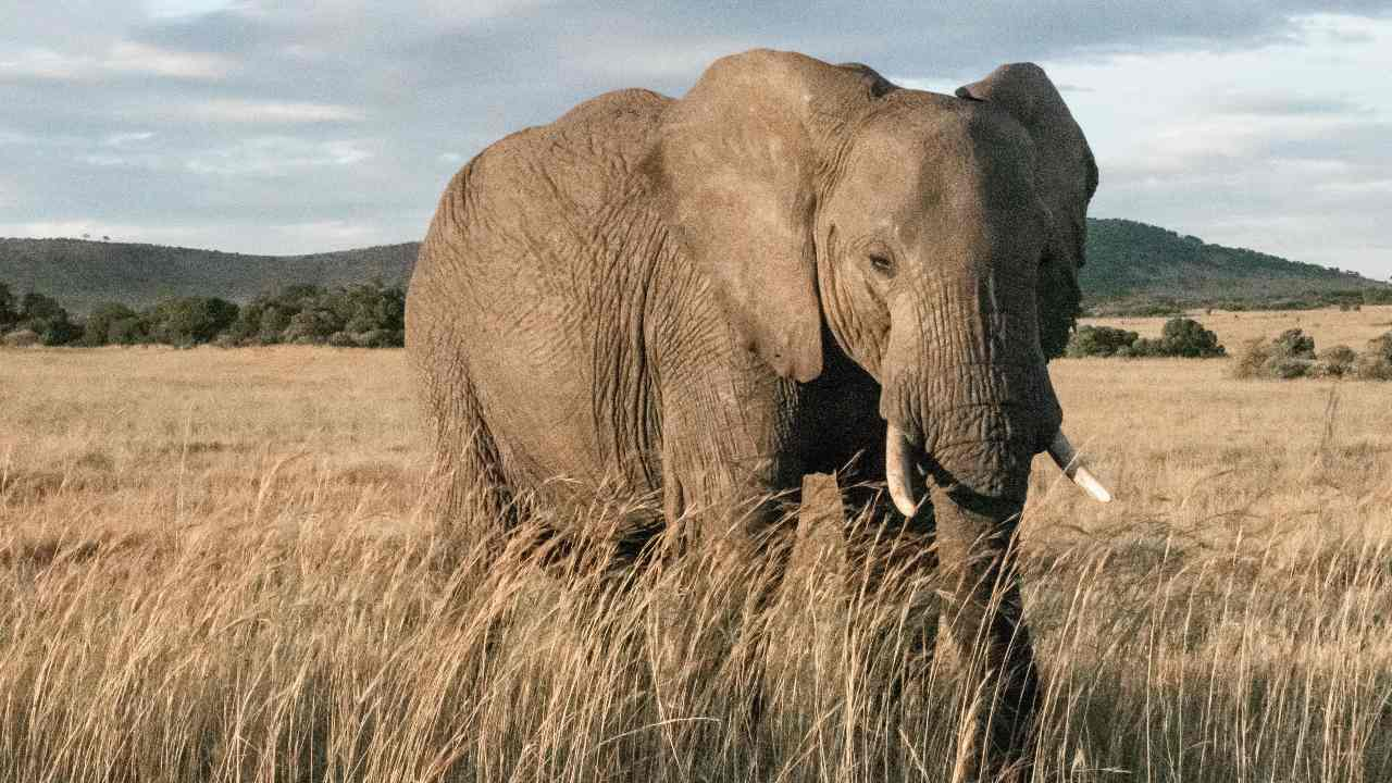 Satellite images to assist in elephant conservation efforts in Africa- Technology News, Gadgetclock