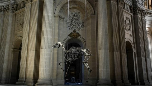 In Paris' Invalides Museum, memorial of Napoleon's favourite horse Marengo outrages fans-Art-and-culture News , Firstpost
