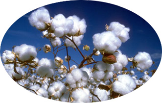 cotton is so nice