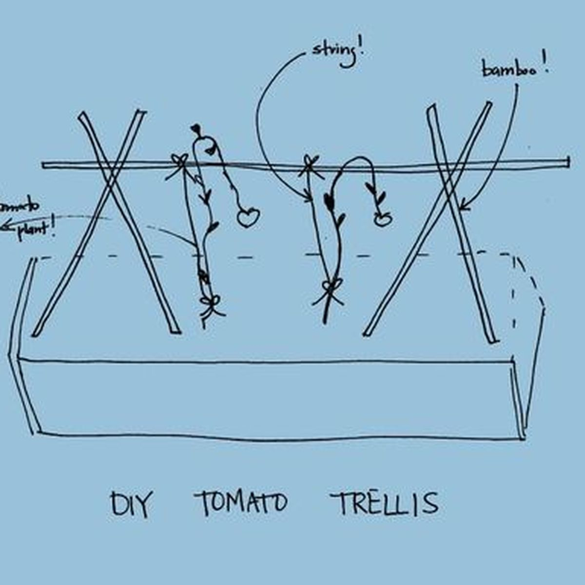 hight resolution of tomato diy pruning and trellises