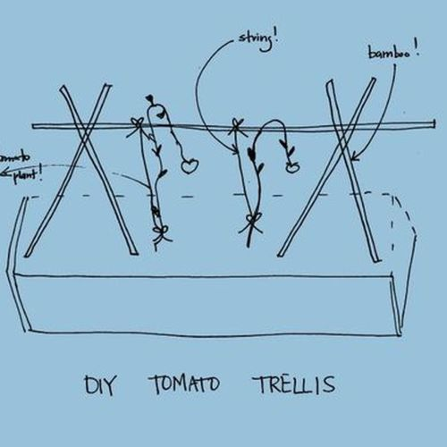 small resolution of tomato diy pruning and trellises