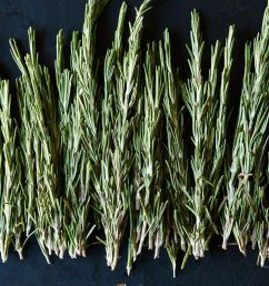 fresh rosemary and how to use it at every meal [ 1200 x 1200 Pixel ]