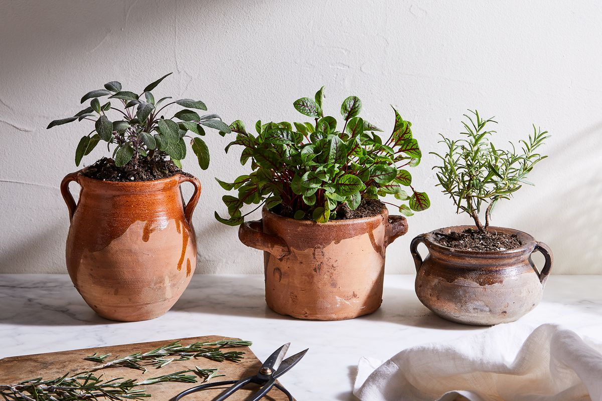 3c2fd896 7d41 40f0 8627 28b2195aac05 2019 0816 etu home vintage ceramic herb pots 3x2 ty mecham 001