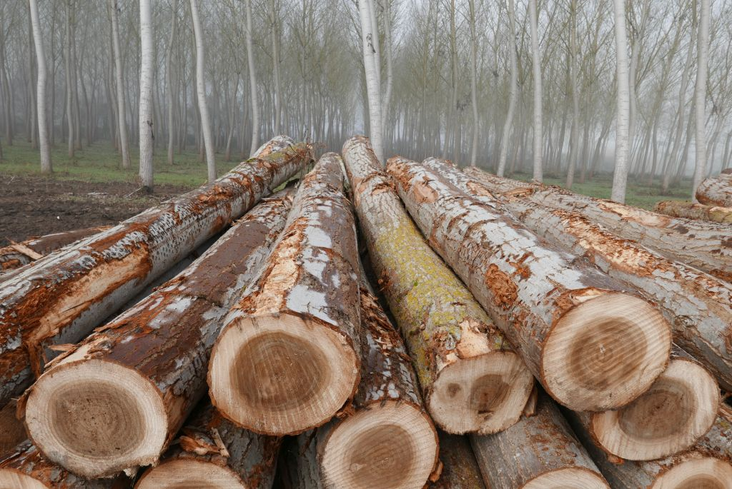 Poplar Lumber Prices