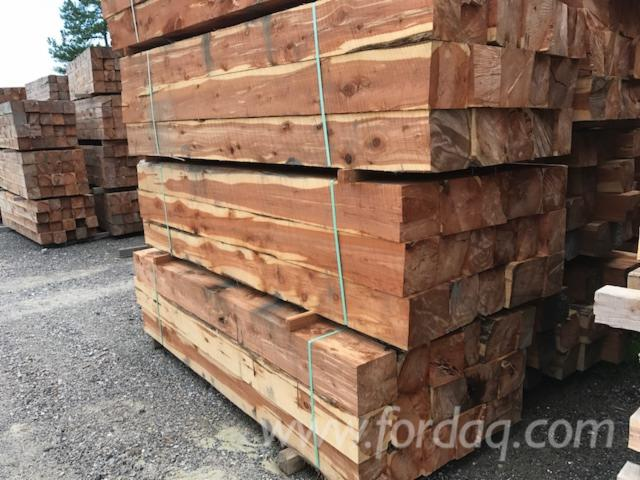 For ExportSale Eastern Red Cedar LogsCants from USA for