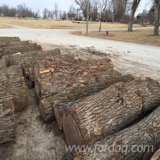Maple Tree Logs