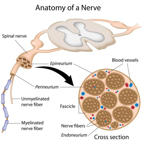 small resolution of peripheral nerve fiber types mountain west foot ankle institute diagram of nerve fiber