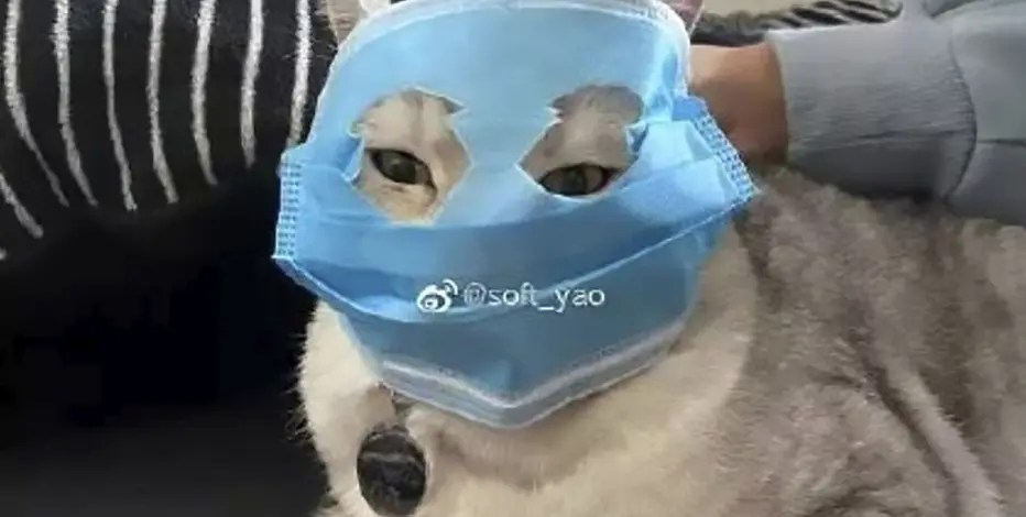 Corona Virus Mask Funny