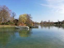 P20 Lite lac