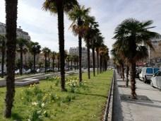 P20 Lite palmiers