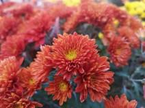 Photo de fleur 3