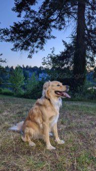 pixel-4-camera-sample-dog-2
