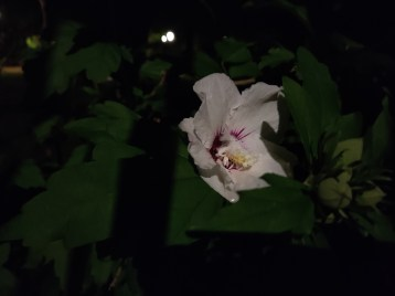 xiaomi-mi-10-lite-sample-photo-nuit- (1)