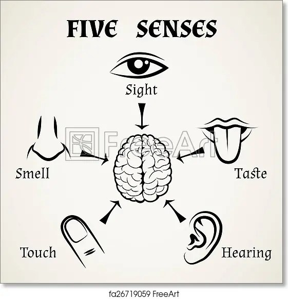five senses diagram 1987 toyota truck wiring free art print of icons human eye nose and ear smell taste touch vector illustration freeart fa26719059