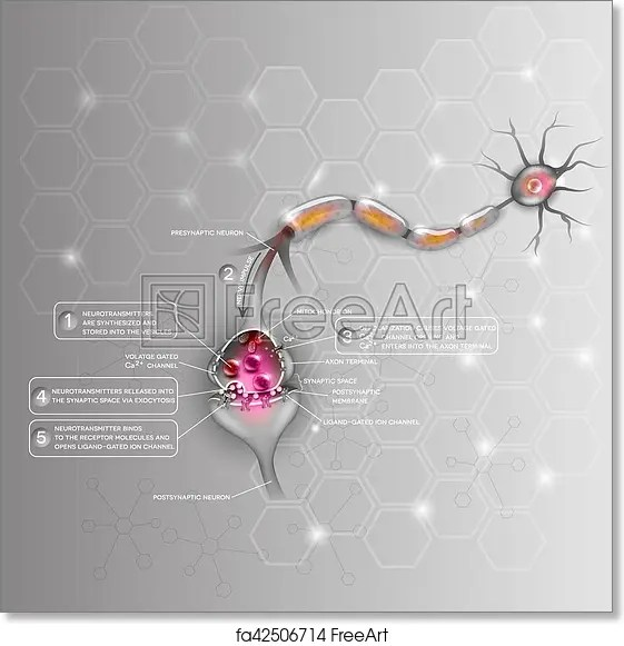 detailed neuron diagram 1998 f150 trailer wiring free art print of synapse anatomy beautiful colorful illustration passes signal to another abstract scientific background