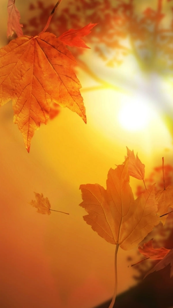 Autumn Falling Leaves Wallpaper 30 Free Fall Iphone Backgrounds Freecreatives