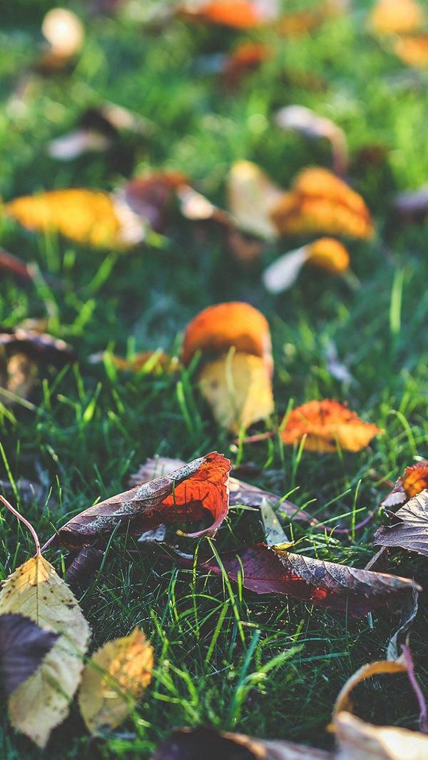 Late Fall Wallpaper Nature 30 Free Fall Iphone Backgrounds Freecreatives