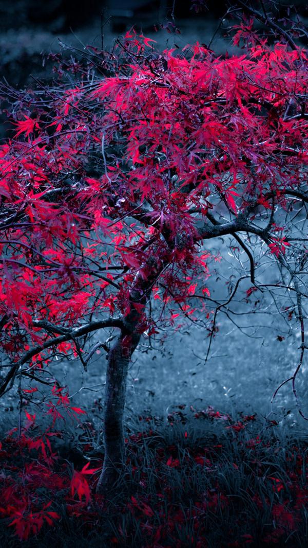 Beautiful Leaf Hd Wallpaper 30 Free Fall Iphone Backgrounds Freecreatives