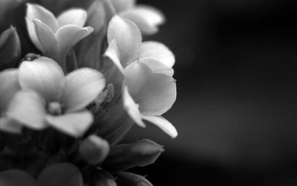 Black and White Elegant Backgrounds