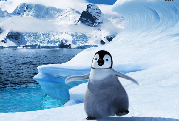21 Penguin Wallpapers Backgrounds Images  FreeCreatives