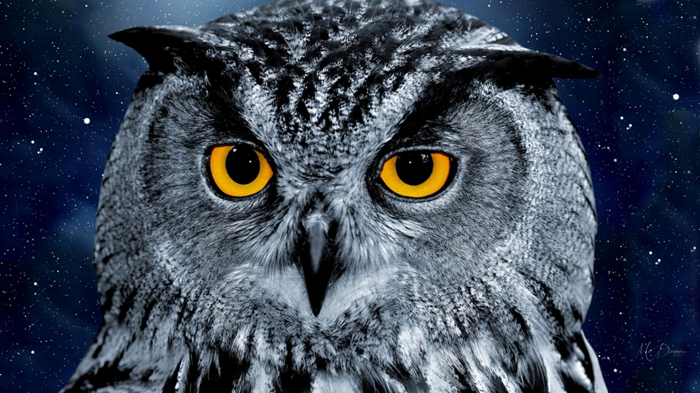 Branch Wallpaper Cute 20 Owl Wallpapers Backgrounds Images Freecreatives