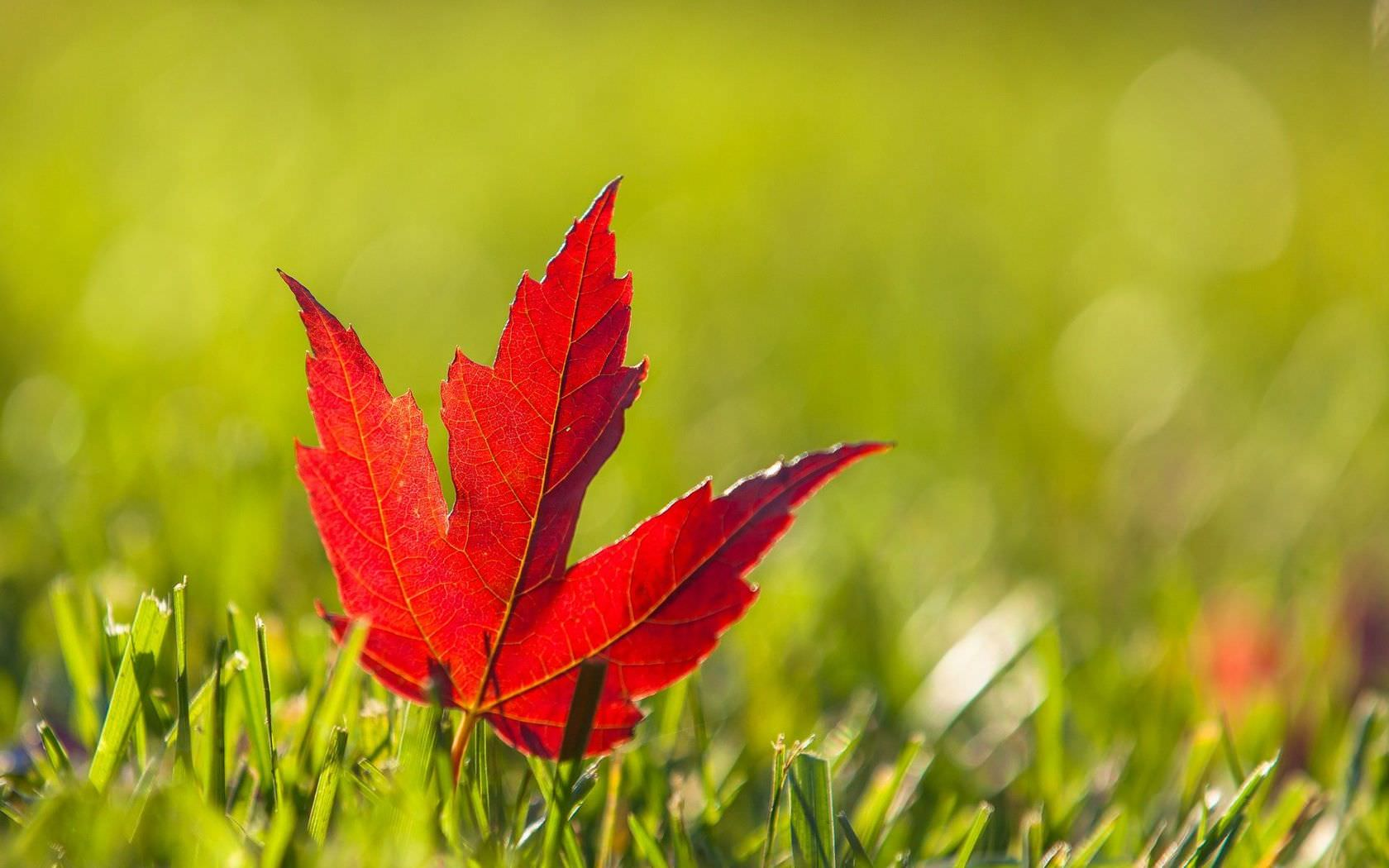 Free 21 Leaf Backgrounds In Psd