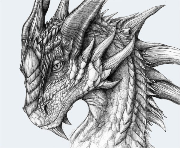 Realistic Dragon Drawings Free & Premium Creatives