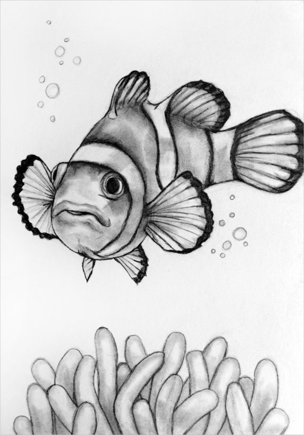 Realistic Fish Drawing : realistic, drawing, Drawings