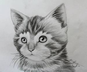 drawing awesome animals animal drawings easy amazing really kitten pencil clipart hand deviantart sketches pencils clip cats horse arch student