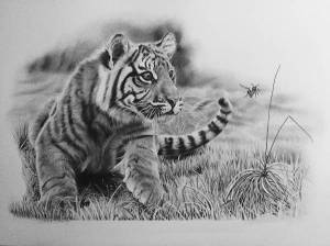 tiger drawing cub drawings easy draw cool sketches tattoo pencil cats cartoon lsu paintingvalley very