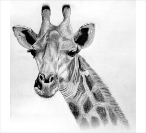 giraffe drawing drawings simple painting paintingvalley abstract