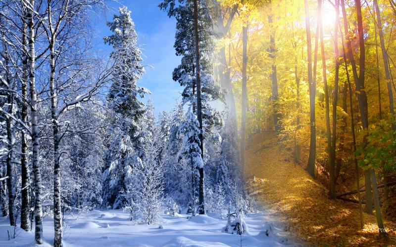 Cute Animated Fairy Wallpapers Hd Fall Winter Collide Wallpaper Download Free 85604