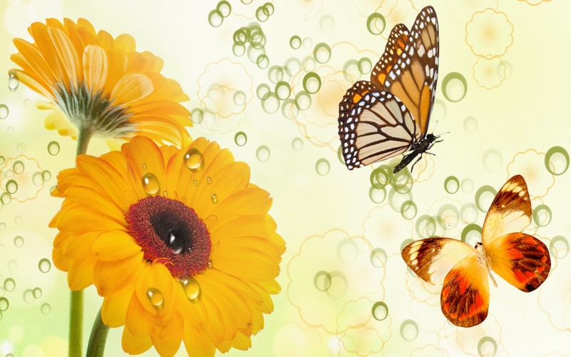 HD Golden Flowers Butterflies Wallpaper Download Free