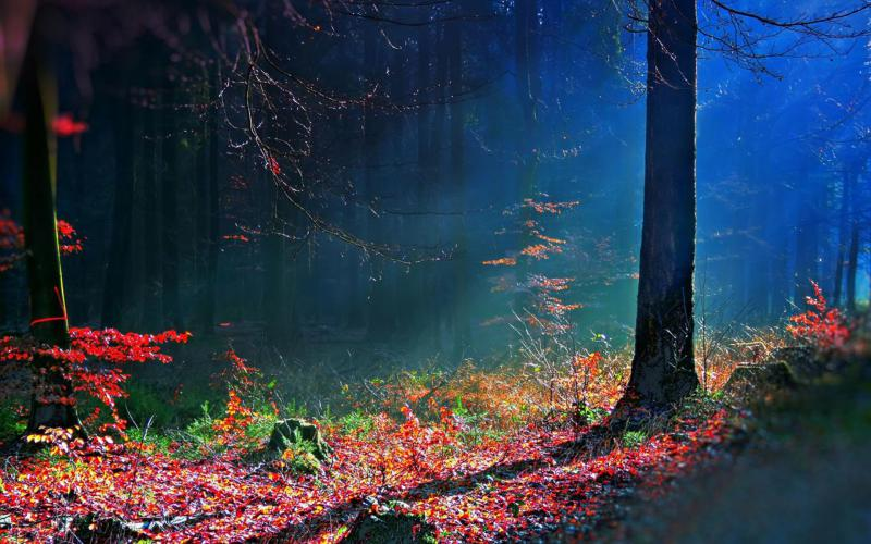 Moving Fall Wallpapers For Windows 10 Hd Mystical Forest Wallpaper Download Free 104211