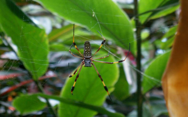 Cute Wallpapers Of Baby Animals Hd Jamaican Spider Wallpaper Download Free 124114