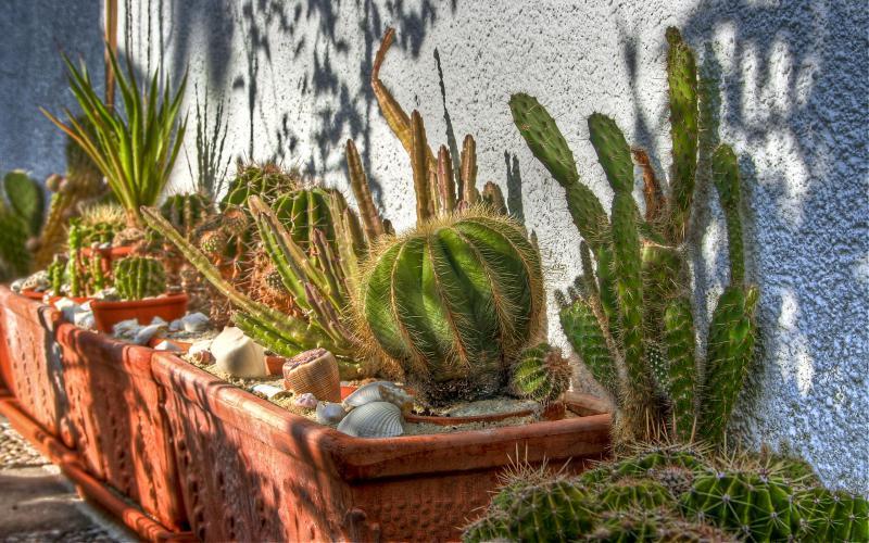 Best Luxury Car Wallpapers Hd Cactus Life Wallpaper Download Free 83326