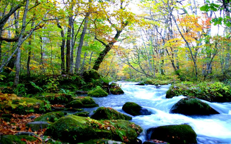 Cute Baby Ultra Hd Wallpapers Hd Forest Stream Wallpaper Download Free 77353