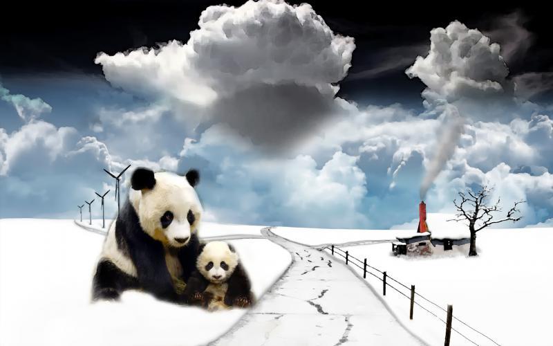 HD Panda Winter Paint Wallpaper Download Free 47839