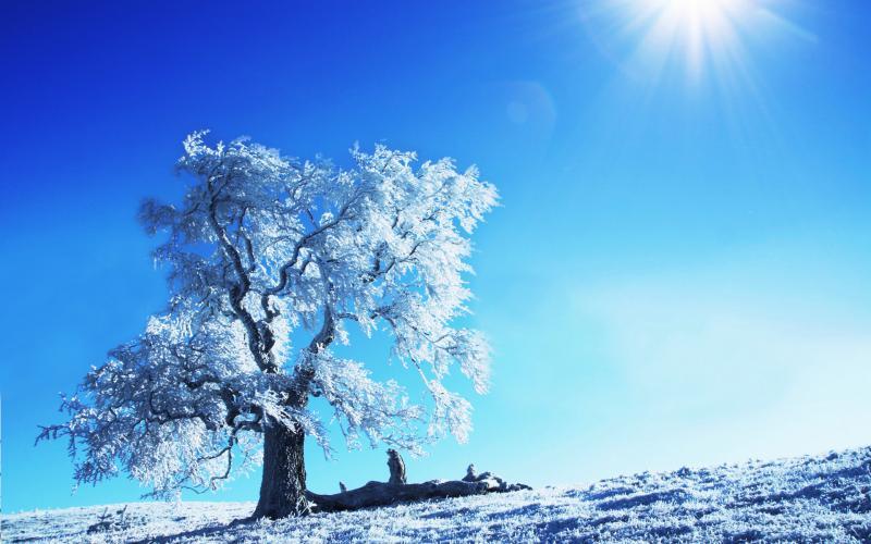 So Cute Good Morning Wallpapers Hd Winter Sunshine Wallpaper Download Free 77986
