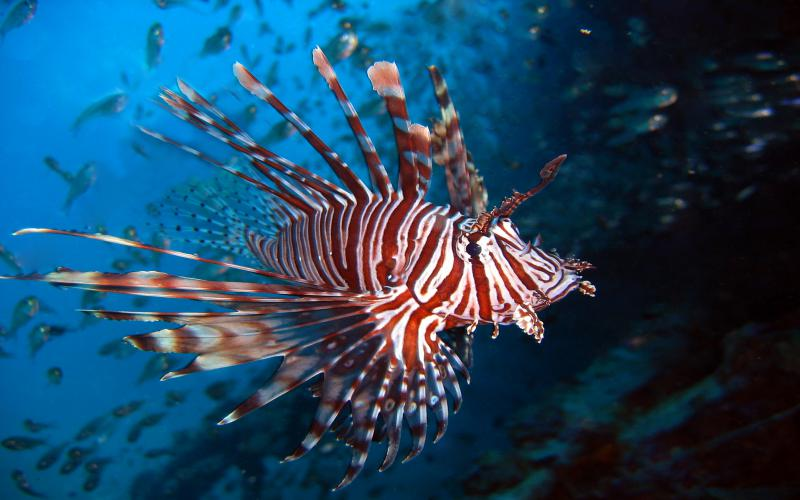 Download Snow Fall Animated Wallpaper Hd Lionfish Wallpaper Download Free 123996