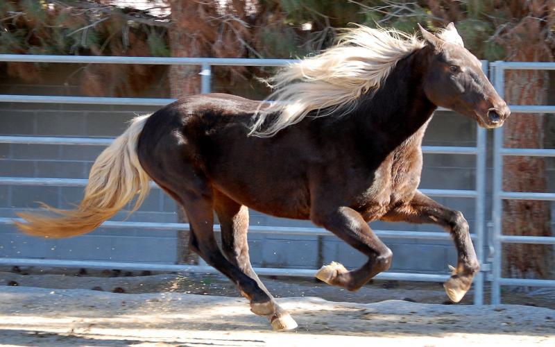 Good Morning Cute Baby Hd Wallpaper Hd Rocky Mountain Horse Wallpaper Download Free 105473