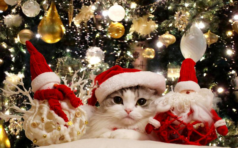 Wallpaper Animal Funny Christmas
