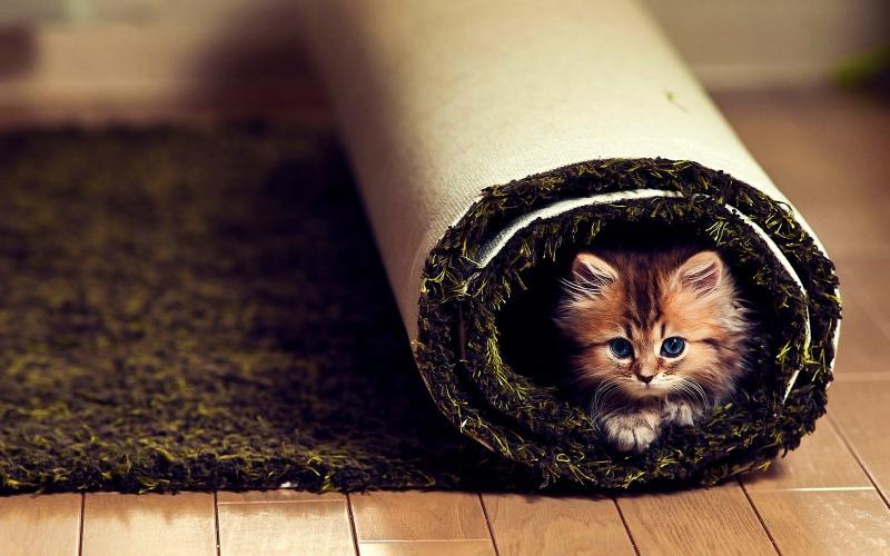 Cute Kitten Wallpaper Free Hd Comfort Wallpaper Download Free 114644