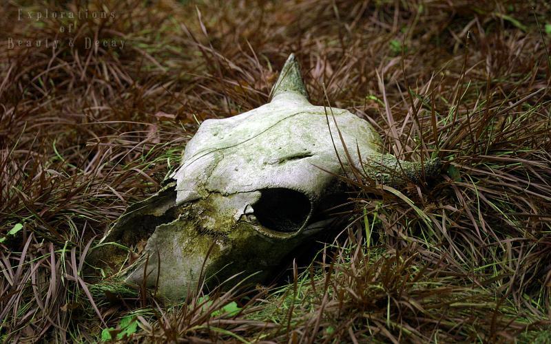 Cute Floral Computer Wallpaper Hd Nature Decay Rotting Bull Skull Wallpaper Download