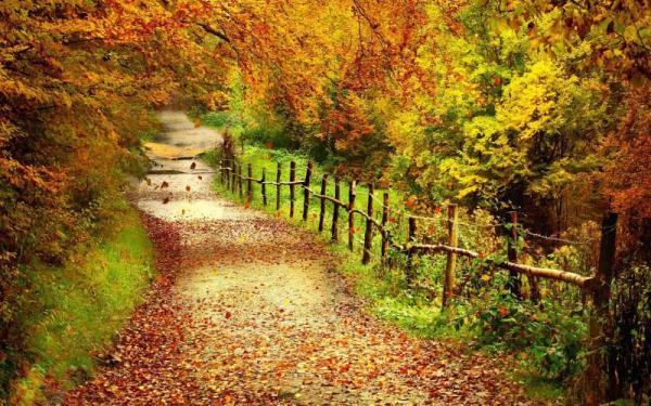 hd beautiful country lane in autumn